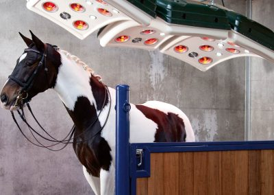 Infrared Light Therapy For Equine Industry Healing & Circulation.